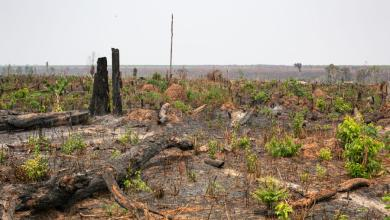 Photo of Cambodian sanctuary ravaged by logging