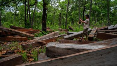 Photo of Plundering Cambodia's Forests