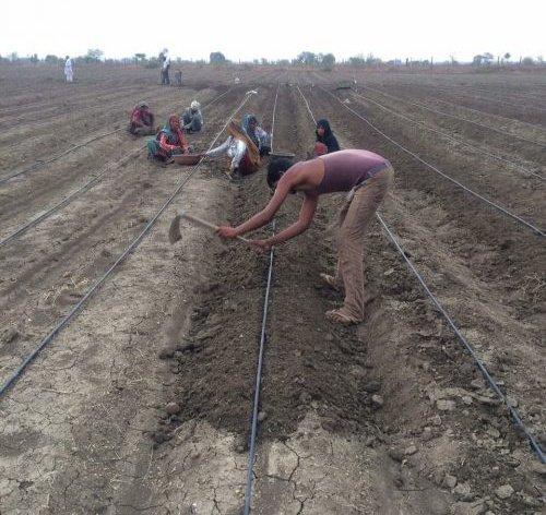 Trang trại của Sankalp Sharma theo phương pháp canh tác tự nhiên, không dùng hóa chất hay thuốc bảo vệ thực vật.