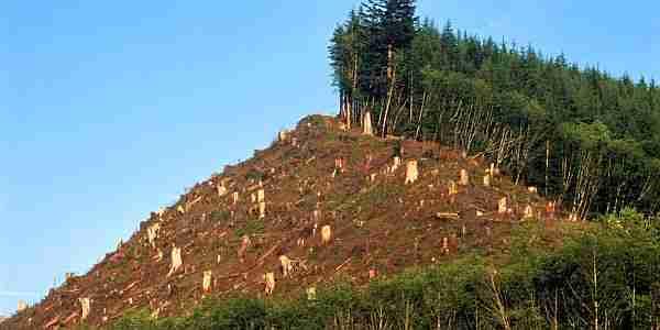 ormanlar-küresel_ısınmaya-küresel_ısınma-karbondioksit-metan