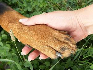 dog-hand-paw