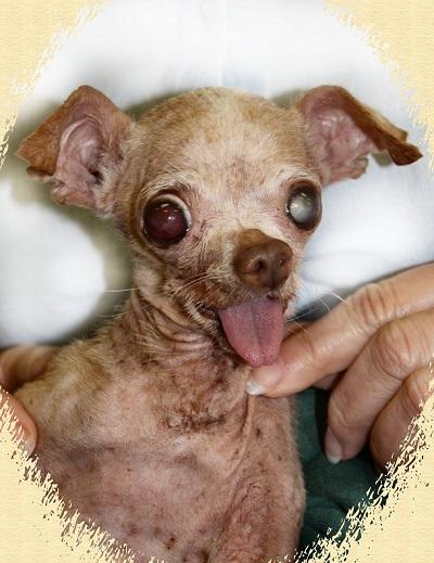 ugly dog-khurki.net