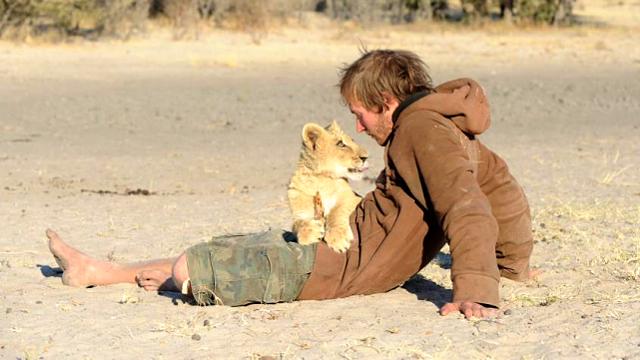 set_lion_rescue_young