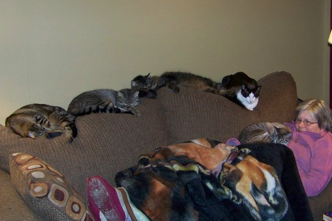 Crazydivorcecats