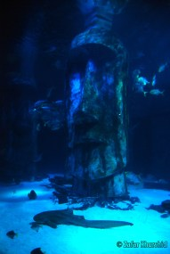 A mysterious looking Easter Island head watches over the denizens of the Shark Tank