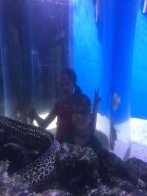 fun activities for a family aquarium