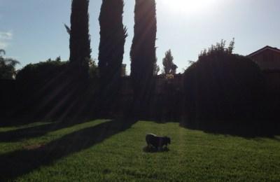 Backyard with Holli