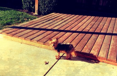 Saffy in sunshine