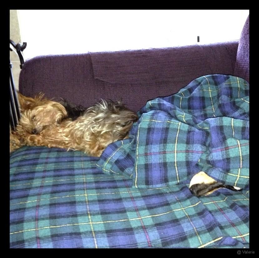 Lazy doggies