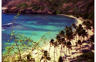 1991, Oahu