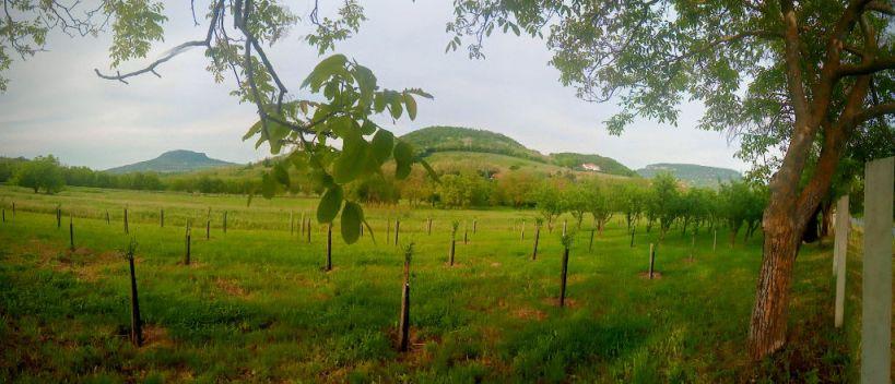 A Szent-György-hegy és a Badacsony Szigligetről