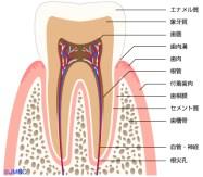 16.03.17歯のイラスト