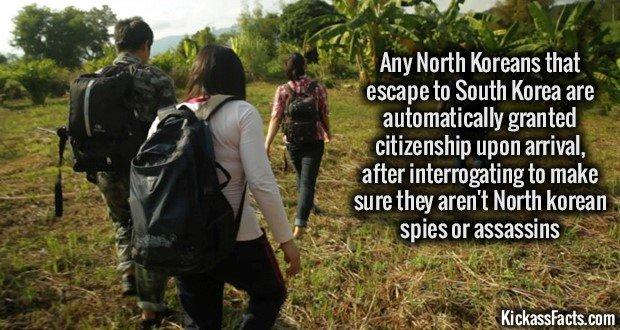 1146 North Korean Escapees