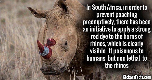 1181 Red Horn Rhino