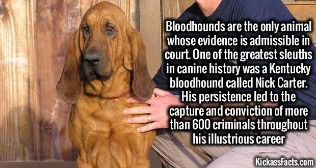 1255 Bloodhounds