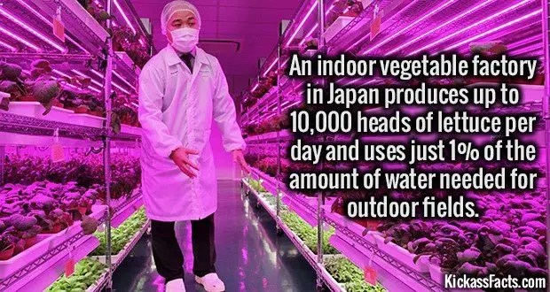 1735 Indoor Vegetable Factory Japan