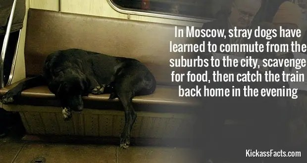 497MoscowDogs