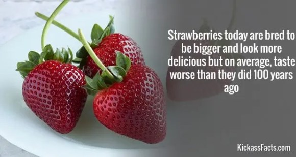 737Strawberries