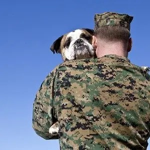 PTSD Therapy Dogs