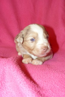 Spice s Cheer at 3 weeks