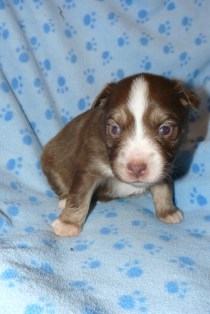 Spice s Guiness at 3 weeks