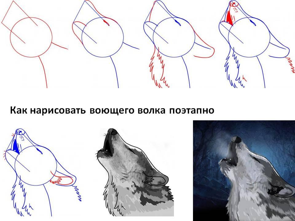 самую картинки нарисовать волка карандашом поэтапно пару ноготков