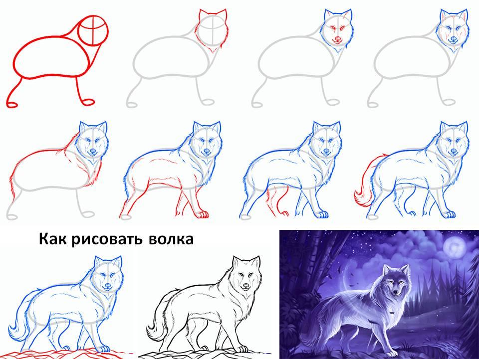 картинки нарисовать волка карандашом поэтапно сопла способствует росту