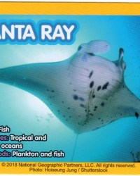 2018-april-weird-but-true-national-geographic-mcdonalds-happy-meal-toys-cards-manta-ray-back.jpg