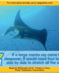 2018-april-weird-but-true-national-geographic-mcdonalds-happy-meal-toys-cards-manta-ray-front.jpg
