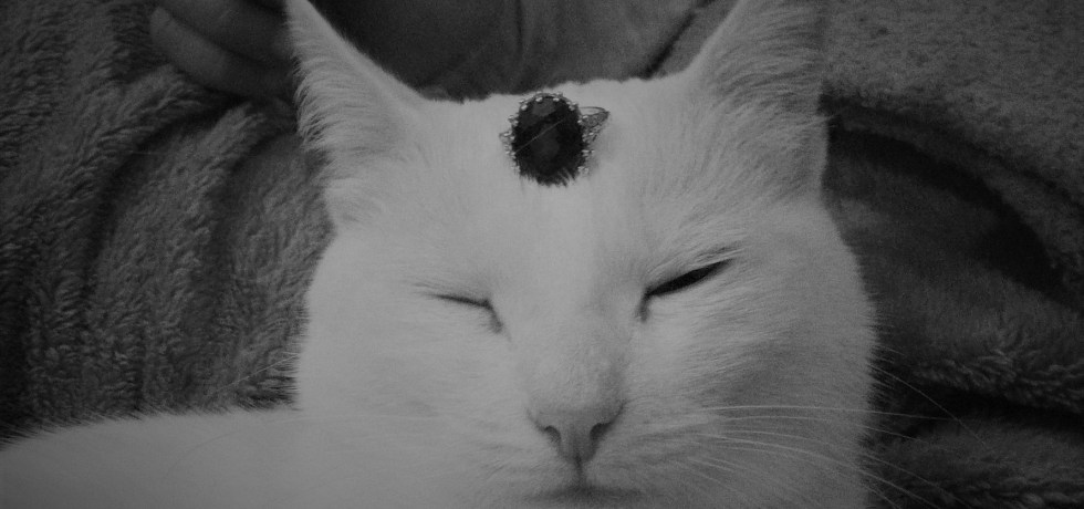 cat, jewelry, funny,