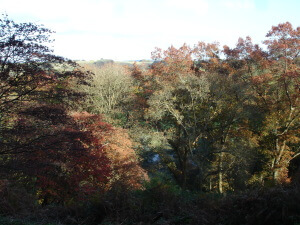 The lake at Winkworth Arboretum