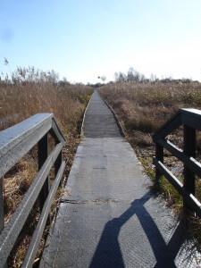 Boardwalk at Wicken Fen