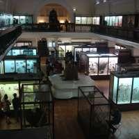 The Horniman Museum, London