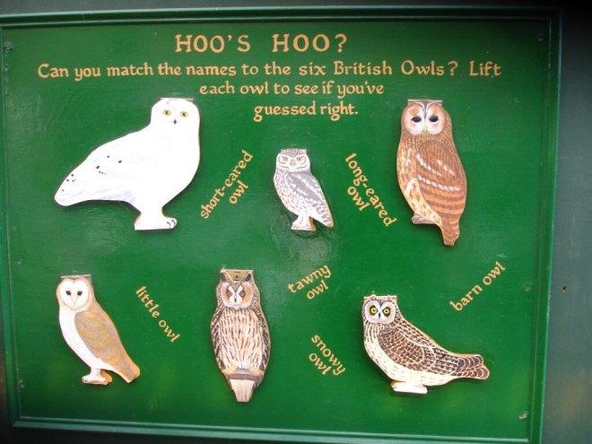 British owls at the Scottish Owl Centre