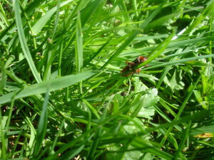 Bug in the grass at Chartwell