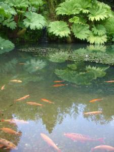 Goldfish pond at Chartwell