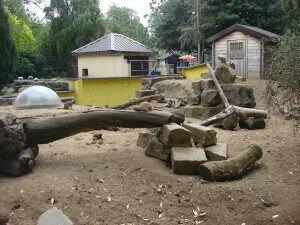 Meerkats at Battersea Park Children's Zoo