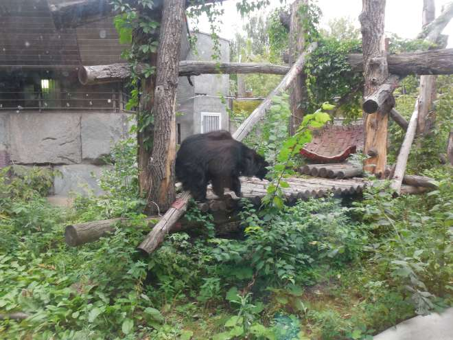 Bear at Moscow Zoo