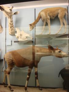 Interesting Mammals at Tring Natural History Museum