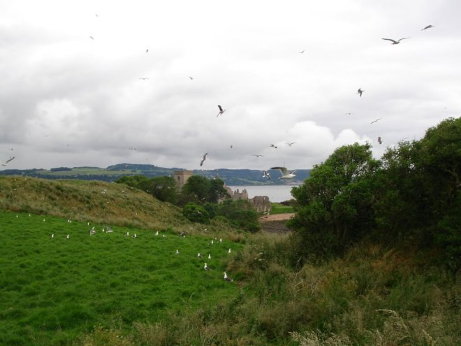 Seagulls and the abbey on Inchcolm Island