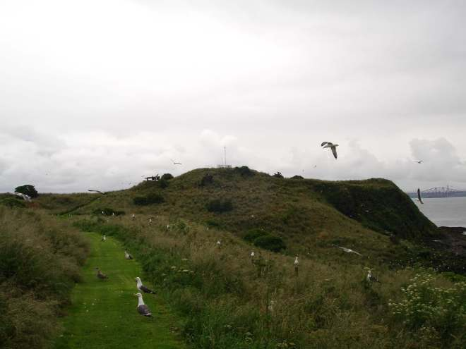 Seagulls on Inchcolm Island