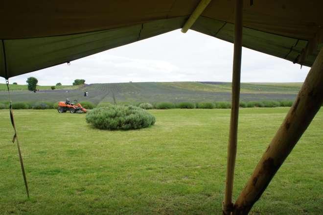 Tent Hitchin Lavender Farm Hertfordshire