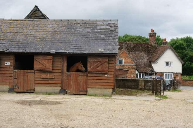 Horses Hitchin Lavender Farm Hertfordshire