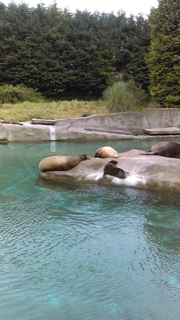 Seals Belfast Zoo