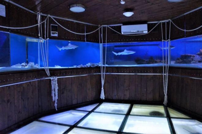 Sharks Moscow Sea Aquarium Chistye Prudy