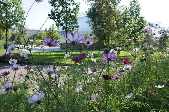 Delicate blue, purple and white flowers with on tall thin stems with frothy frondy leaves in the foreground. In the background are some trees and grass surrounded by paths, and behind that a silver rectangular building that is Garage art gallery.
