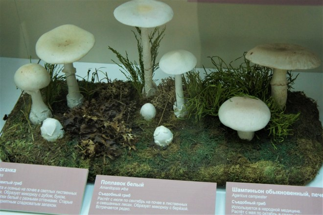 Poisonous and edible mushrooms
