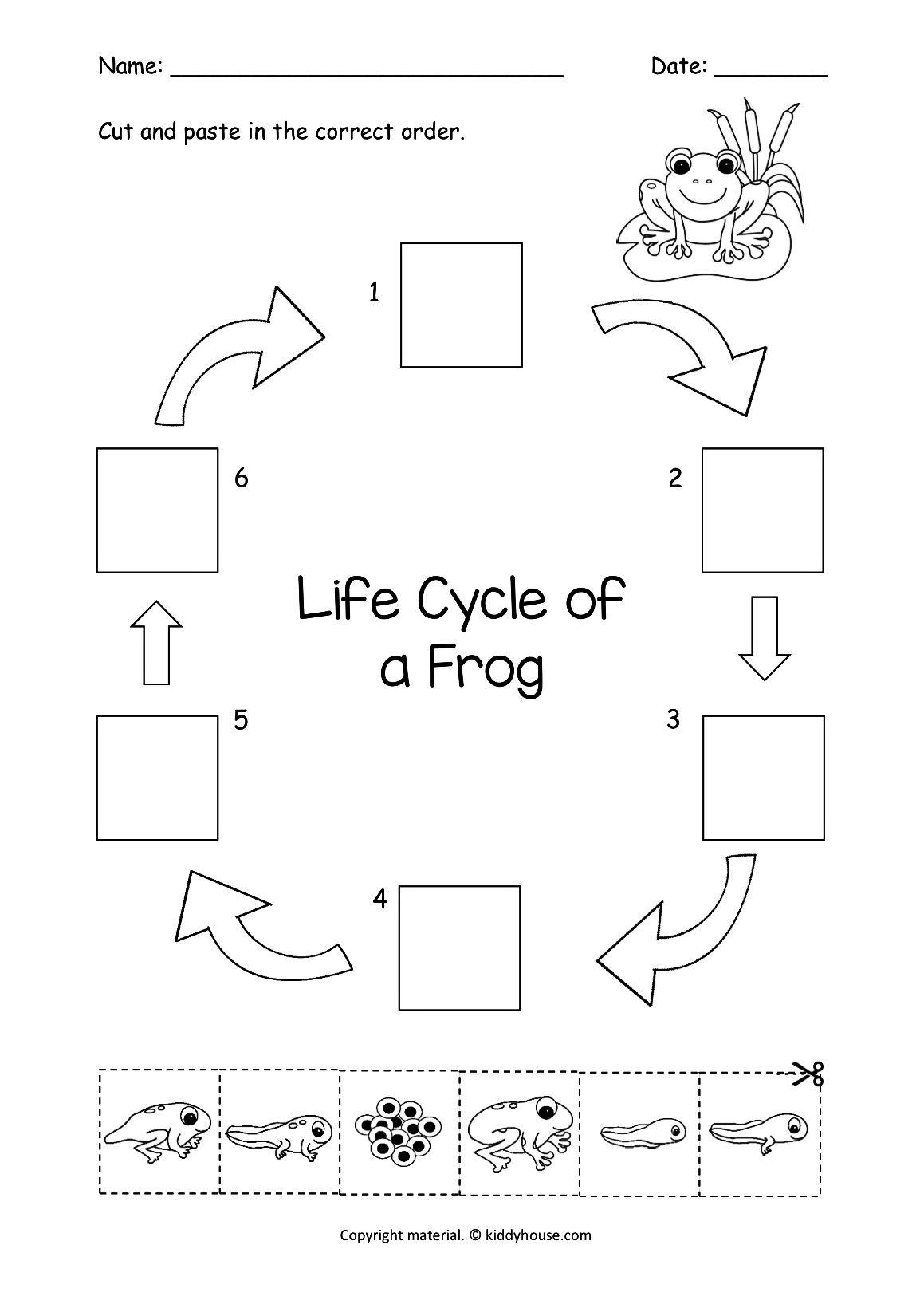 picture relating to Frog Life Cycle Printable known as Lifetime Cycle of a Frog Slice and Paste