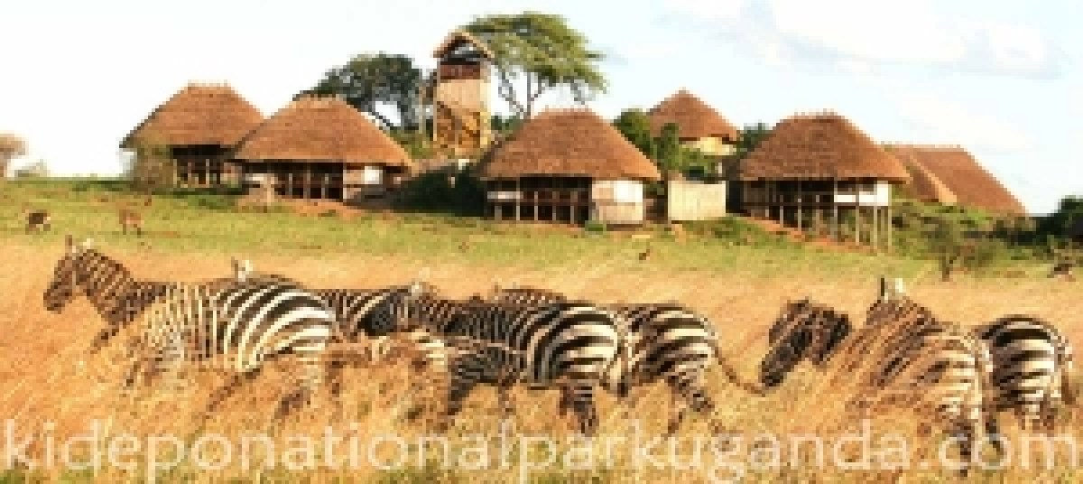 apoka-safari-lodge-kidepo-valley-national-park-uganda