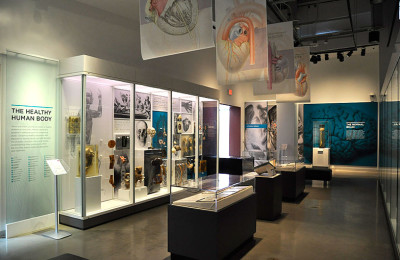 Displays all about the human body